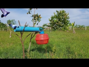 Amazing Bird Trap Using PVC And Plastic Basket Make By Smart Girl